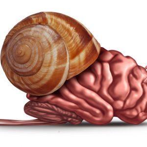 Les biais cognitifs